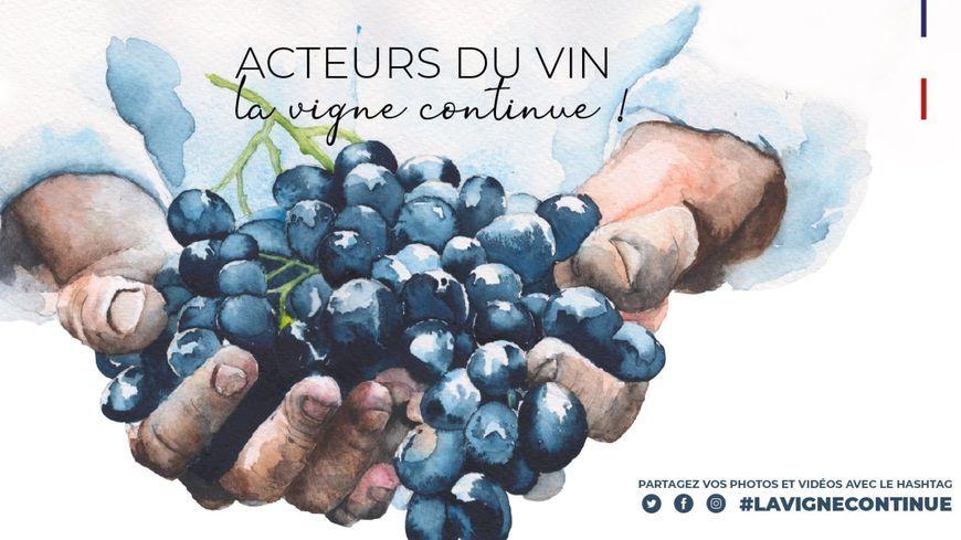 La vigne continue