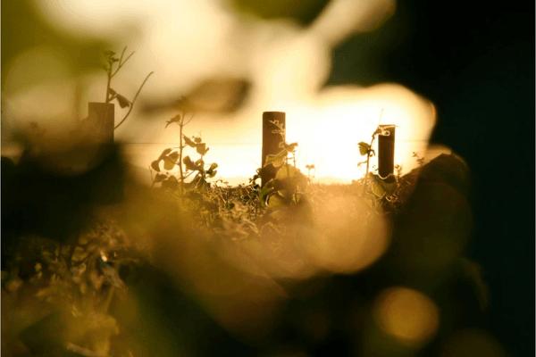 Les Français et les vins bio et labellisés en 2021 2